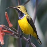 web_page_cropped_sunbird1