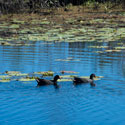 Working towards a healthier Lagoons Catchment