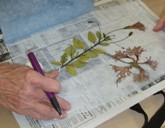 Herbarium_specimens_for_web