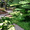 Tropical Shade Gardens and The Fernery