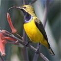 The best beak in the Botanic Lagoons