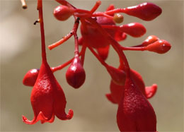 'Nature's Christmas Decorations' School Holiday Quiz
