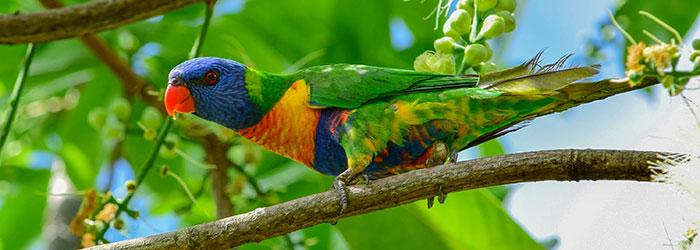 Birdlife Mackay Event