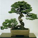 Mackay Bonsai Society Meetings