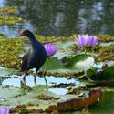 Bird watching at the Gardens